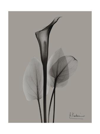 Flora Portrait A