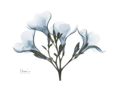 Oleander Portrait