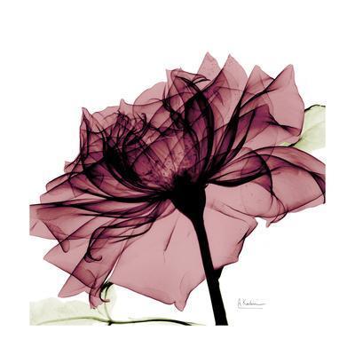 Chiant Rose 1