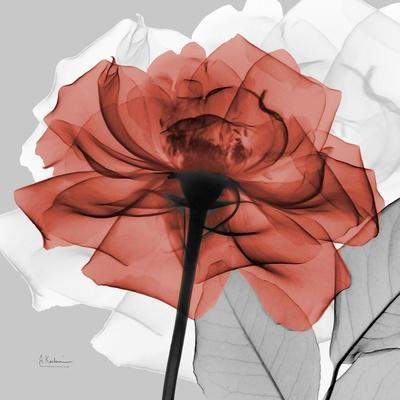 Rose on Gray 1