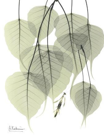 Bo Tree Nature