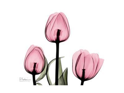 The Tallest Tulip