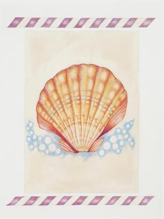 Shell Cardita