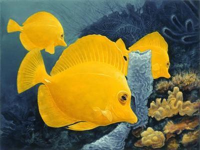 Yellow Tangs
