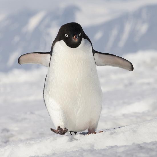 penguin - photo #18