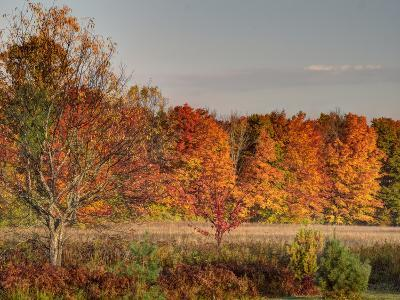 USA, Michigan, Upper Peninsula. Fall Colors in Hiawatha NF