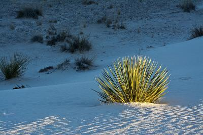 Sand Patterns, Yucca, White Sands Nm, Alamogordo, New Mexico