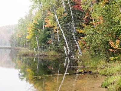 Michigan, Upper Peninsula. Fall Colors on Thornton Lake, Alger Co
