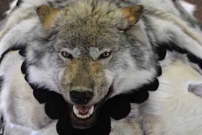 USA, Alaska, Ketchikan, Downtown Summertime. Wolf Skin