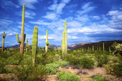 Organ Pipe Cactus National Monument, Ajo Mountain Drive in the Desert