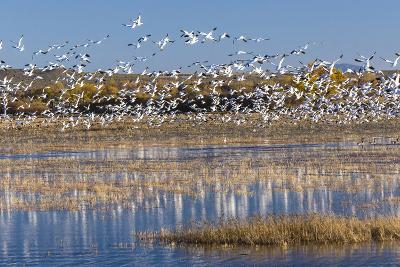 New Mexico, Bosque del Apache NWR. Fall Colors in Grasses