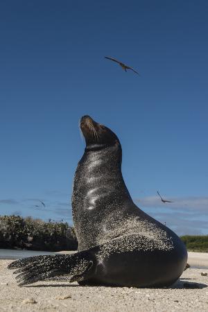 Galapagos Sea Lion Galapagos, Ecuador