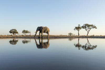 Botswana, Chobe NP, African Elephant at Water Hole in Savuti Marsh