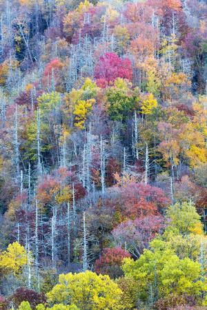 Tennessee, Great Smoky Mountains NP, View Along Newfound Gap Road