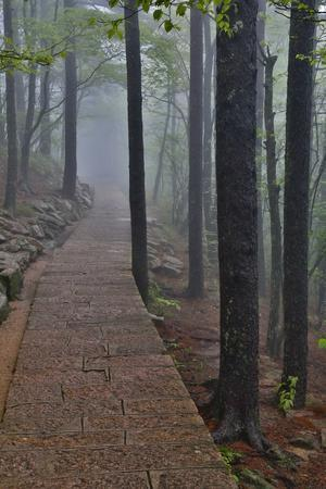 Trail in Fog, Yellow Mountains a UNESCO World Heritage Site