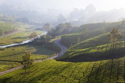 Tea Plantations, Munnar, Western Ghats, Kerala, South India