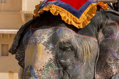 Elephants. Amber Fort. Jaipur. Rajasthan. India