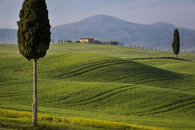 Cypress Trees and Winding Road to Villa Near Pienza, Tuscany, Italy