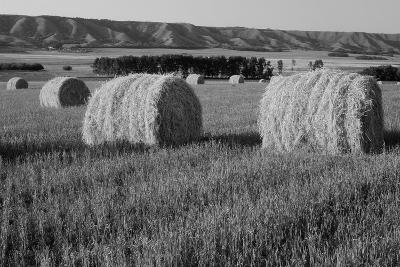 Canada, Manitoba, Rolled Hay Bales in Field
