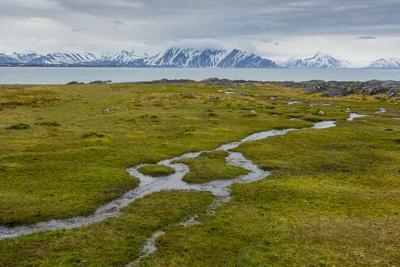 Norway. Svalbard. Camp Millar. Streams of Water Flow over the Moss