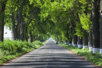 Romania, Danube River Delta, Salcioara, Country Road
