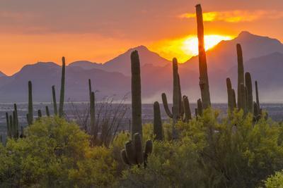 USA, Arizona, Saguaro National Park. Sunset on Desert Landscape