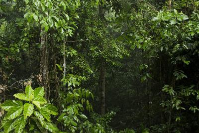 Rainforest Rain Storm, Yasuni NP, Amazon Rainforest Ecuador