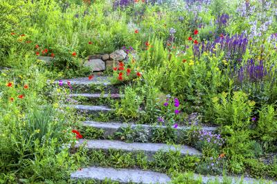 USA, Wayne, Pennsylvania. Summer Flowers in Chanticleer Garden