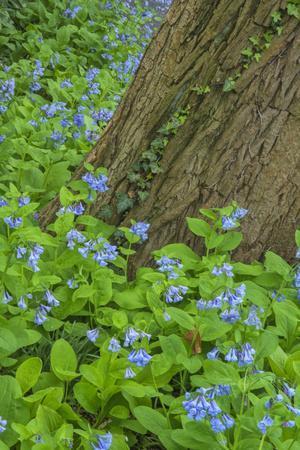 USA, Pennsylvania, Wayne, Chanticleer Garden. Spring Scenic