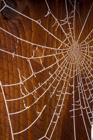 USA, Oregon, Keizer. Hoarfrost on Orb Spider Web