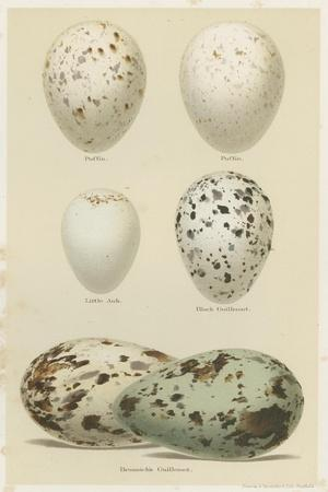 Antique Bird Egg Study II