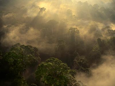 Sunrise over Lowland Rainforest, Danum Valley, Sabah, Borneo