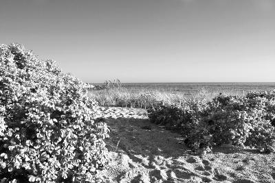 A Scenic Infrared View of Shrubs in Bloom on a State Park Beach on Long Island Sound