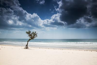 A Lone Tree on the Beach in Jericoacoara, Brazil