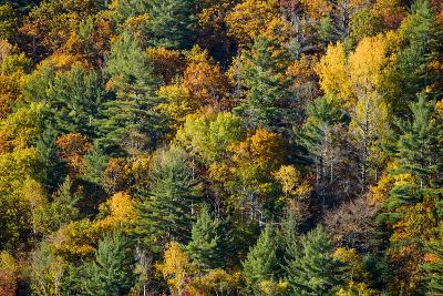 Bright Fall Foliage Colors in a Mixed Forest