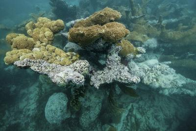 Coral Reef on the Mosquitia Coast