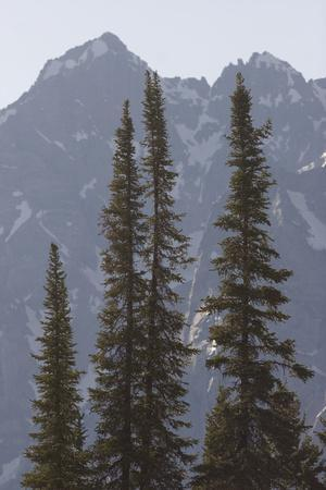 Conifer Trees and the Teton Range in Grand Teton National Park