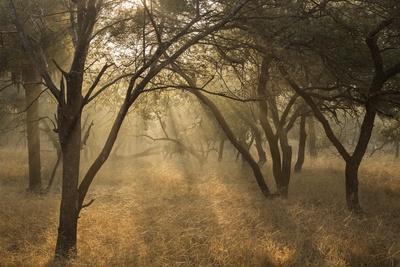 Sunlight Filters Through Trees in Ranthambhore National Park