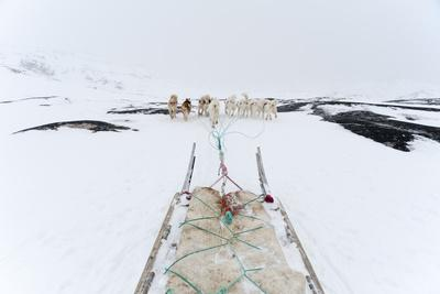 Greenland Dogs Pulling a Dog Sled