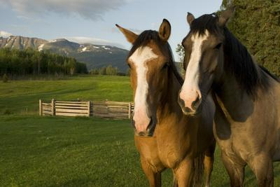 A Pair of Horses Stand in a Pasture