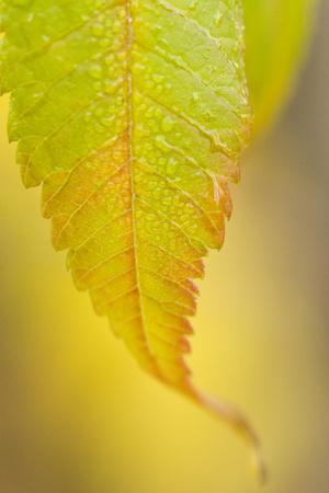 Morning Dew on Autumn Foliage