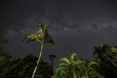 The Milky Way Above Tropical Trees and Foliage of the Atlantic Rainforest, at Night