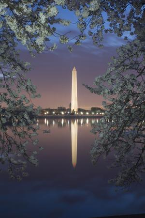 Cherry Blossoms Framing the Washington Monument and the Tidal Basin at Twilight