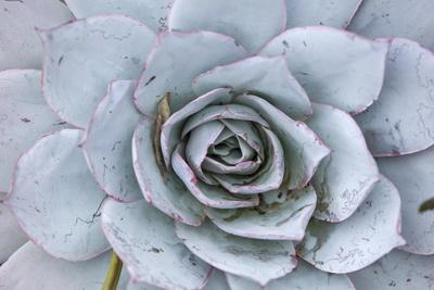 Close Up of a Succulent Plant