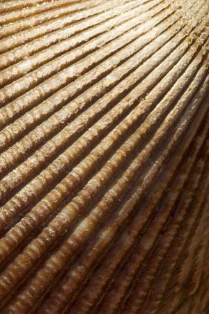 Patterns of a Seashell