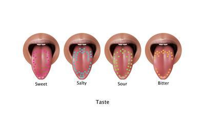 Taste Map, Illustration