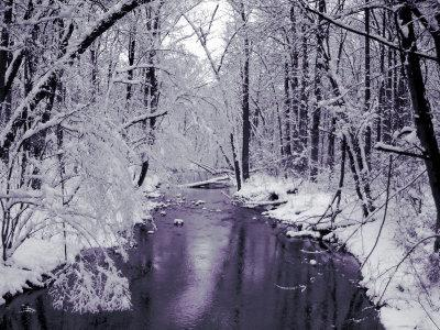Snow Covered Trees along Creek in Winter Landscape