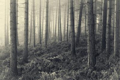 Forest Calm