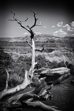 Grand Canyon - National Park - Arizona - United States