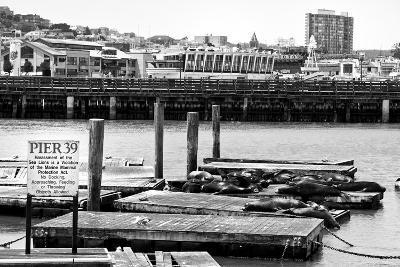 Pier 39 - Fisherman's Wharf - San Francisco - Californie - United States